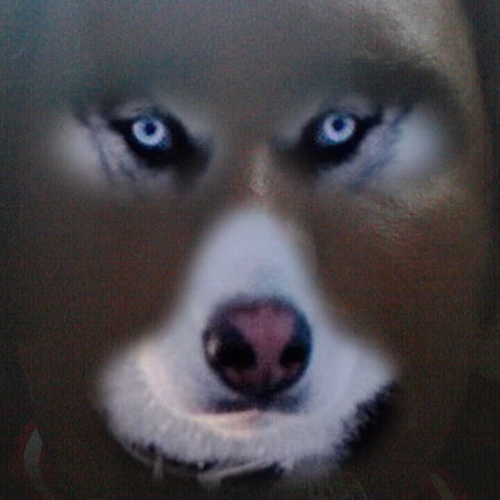 darkshadow's Fursona Avatar