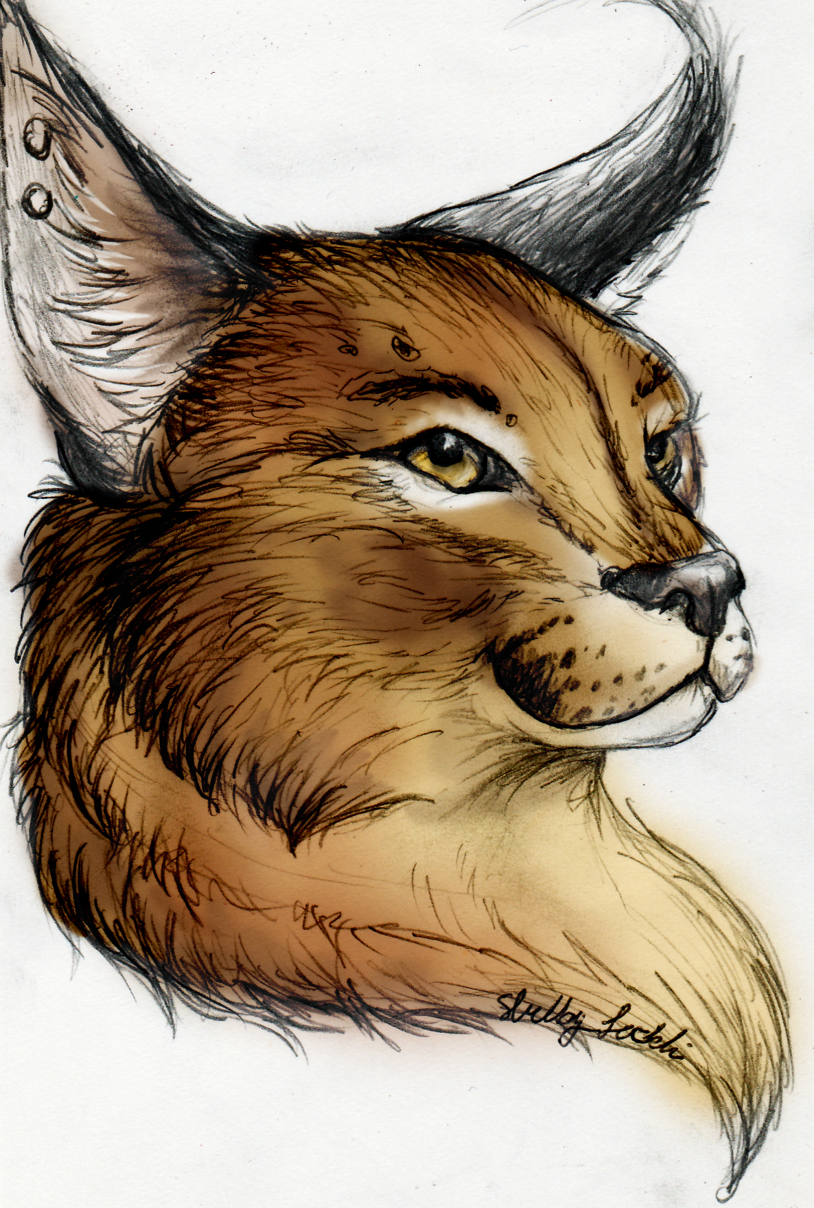 Aussie Kat's Fursona Avatar