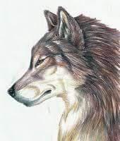 Zartyr Tempestwolf's Fursona Avatar