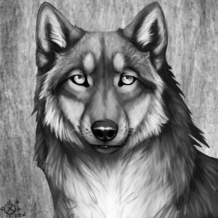 Jerrin Silverwolf's Fursona Avatar