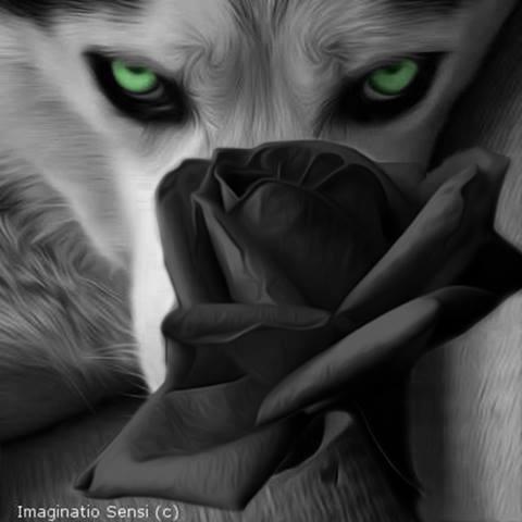 fuzzpawsthewolf's Fursona Avatar